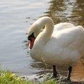 Fauna Birds 269