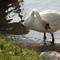 Fauna Birds 270