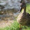Fauna Birds 275