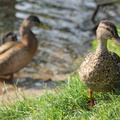 Fauna Birds 276