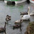 Fauna Birds 279