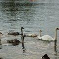 Fauna Birds 282