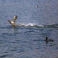 Fauna Birds 286