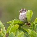 Fauna Birds 088