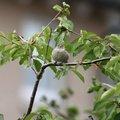 Fauna Birds 090