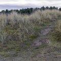 Sea Dunes 002
