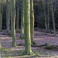 Nature Forest 076