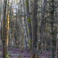 Nature Forest 081