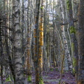 Nature Forest 083