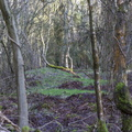 Nature Forest 087