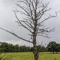 Nature Trees 040