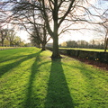 Nature Trees 041