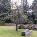 Nature Trees 042
