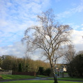 Nature Trees 043