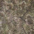 Nature Tree Rings 030