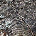 Nature Tree Rings 031