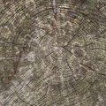 Nature Tree Rings 029