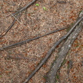Nature Tree Roots 031