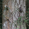 Nature Tree Trunk 234