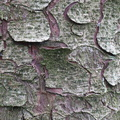 Nature Tree Trunk 230