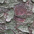 Nature Tree Trunk 231