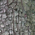 Nature Tree Trunk 232