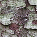 Nature Tree Trunk 233