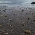 Sea Seashells 029