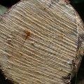 Nature Tree Rings 083