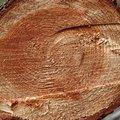 Nature Tree Rings 034