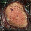 Nature Tree Rings 037