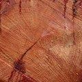 Nature Tree Rings 046