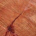 Nature Tree Rings 047