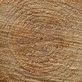 Nature Tree Rings 054