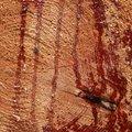 Nature Tree Rings 060