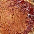 Nature Tree Rings 062