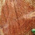 Nature Tree Rings 063