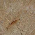 Nature Tree Rings 076