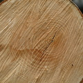 Nature Tree Rings 079