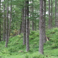 Nature Forest 098