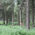Nature Forest 099