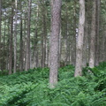 Nature Forest 104