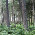 Nature Forest 106