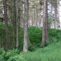 Nature Forest 112