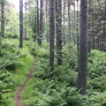Nature Forest 113