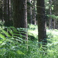 Nature Forest 119