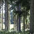 Nature Forest 121
