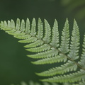 Nature Leaves 028