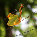 Nature Leaves 025