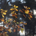 Nature Leaves 031
